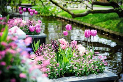 Blumen am Schloss, Bonn-Poppelsdorf