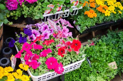 Blumen Hegemann, Bonn-Beuel