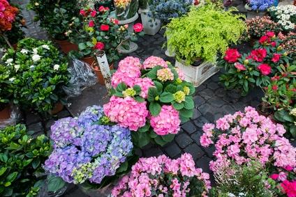 Blumen Köppler, Inh. Stefanie Elsner