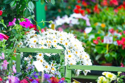 Blumen Menden, Inh. Anna Ehrecke