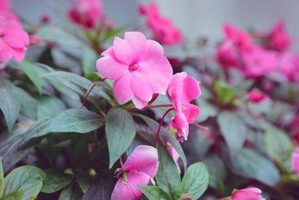 Blumen Mitbringsel, Bonn-Kessenich